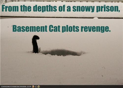From the depths of a snowy prison, Basement Cat plots revenge...
